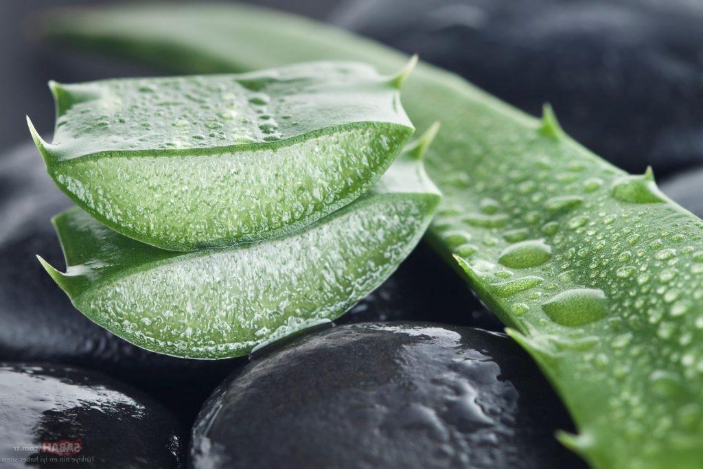 Aloe vera nasıl sulanır?