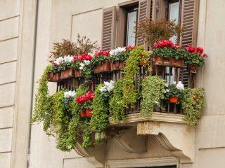 balkon bitkileri nasıl sulanır?