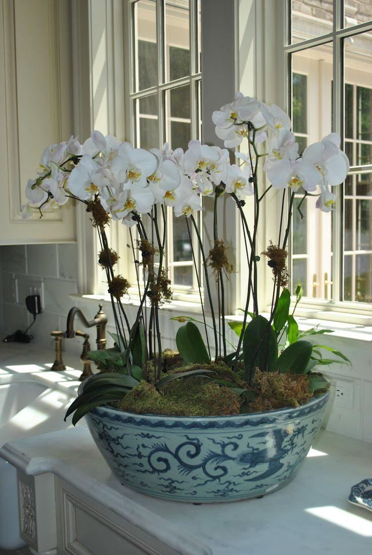 orkide toprağı nasıl olmalıdır?
